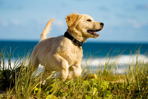 Bench Animal Hospital - Veterinarian in Boise and Meridian